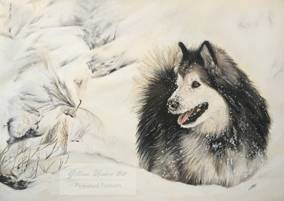 New Work – Alaskan Malamute