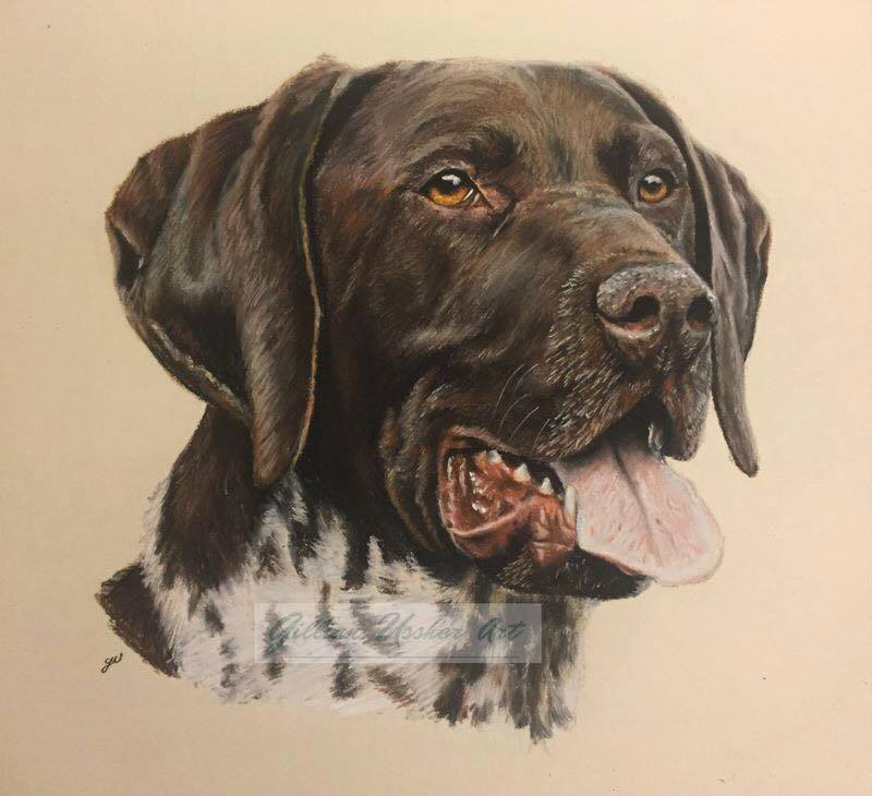 German Shorthaired Pointer Art