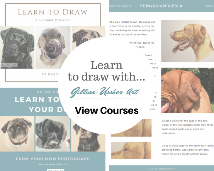 Learn to Draw your Dog-3.png