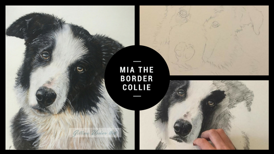 Mia the Border Collie