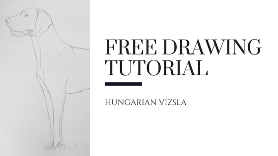 Hungarian Vizsla – Free Short Drawing Tutorial