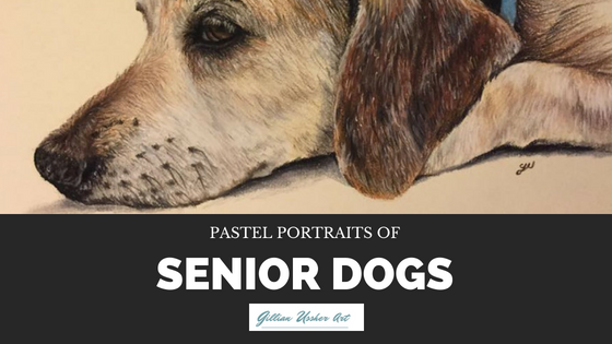 Pastel portraits of senior dogs